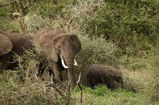 Free Elephant`s Family Stock Photography - 8168892