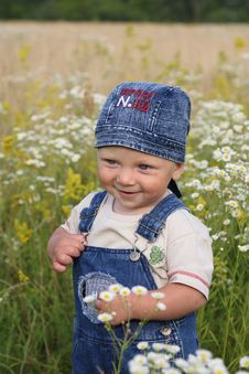 The Kid And Camomiles Stock Photography
