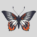 Free Butterfly Royalty Free Stock Photography - 8171147