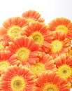 Free Beautiful Sunflower Petals Stock Image - 8173241