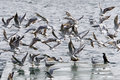 Free Gulls Flying Stock Images - 8175034