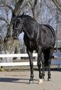 Free Horse Stock Photo - 8179670