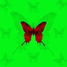 Free Red Butterfly On Green Background Royalty Free Stock Images - 8170449