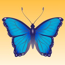 Free Butterfly Stock Images - 8171084