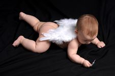 Free Little Angel Royalty Free Stock Images - 8171209