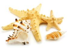 Free Set Of Sea Cockleshells Isolated Stock Photography - 8171392