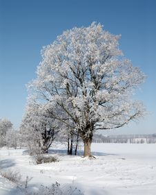 Free Beautiful Cold Winter Day. Royalty Free Stock Images - 8172029