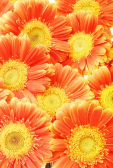 Free Beautiful Sunflower Petals Royalty Free Stock Photos - 8173218