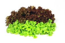 Free Lettuce Is Leaves Royalty Free Stock Image - 8173276