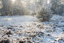 Free Nature And Snow Stock Photography - 8174582