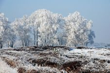Free Nature And Snow Royalty Free Stock Photography - 8174617