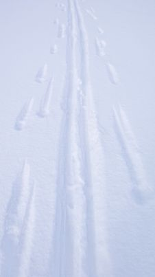 Free Ski Tracks Stock Image - 8174871