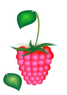 Free Raspberry Stock Photography - 8177012