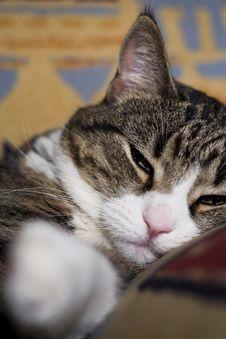Free Sleeping Cat Stock Photography - 8177362