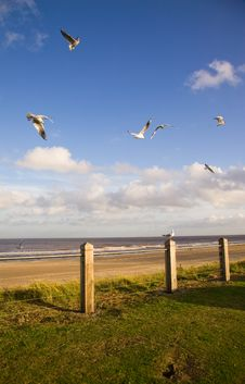 Free Seagulls Flying Stock Photography - 8177472
