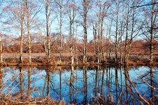 Free Reflective Pond In Winter Stock Photo - 8178760