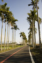 Free Palm Trees And Rice Fields Stock Image - 8183561