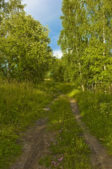 Free Earth Road In Summer Forest Stock Photo - 8180580