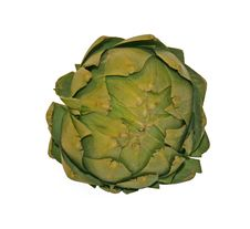 Free Artichoke Stock Photo - 8181260