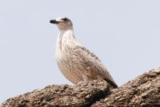 Free Bird Stock Photo - 8182540