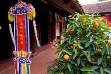 Free Orange Tree And Religious Pennant At Temple Stock Images - 8182644