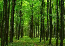 Free Wood Stock Photo - 8185770