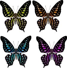 Free Butterfly Four Color Variation Stock Photo - 8187060