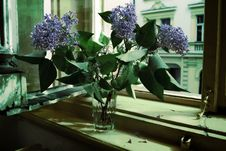 Lilacs In Glass Royalty Free Stock Photo