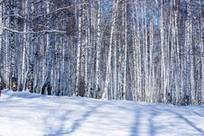 Free Winter Forest Stock Photography - 8187282