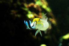 Free Sea Aquarium Stock Image - 8189761