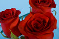 Free Three Red Roses Stock Image - 8190161