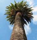 Free Palm Trunk Stock Photo - 8191870