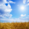Free Wheats Field Stock Image - 8199691
