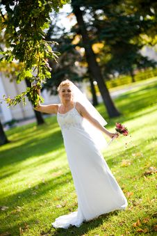 Free Bride And Oak Royalty Free Stock Image - 8190246