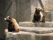 Free The Bears Stock Photos - 8191163