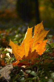 Free Autumn Leaf Royalty Free Stock Image - 8191216