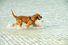 Free Dog Game Royalty Free Stock Photo - 8191465