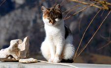 Free Little Cat Stock Photos - 8192253