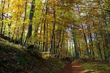 Free Fall In Czech Forests Stock Photo - 8193540