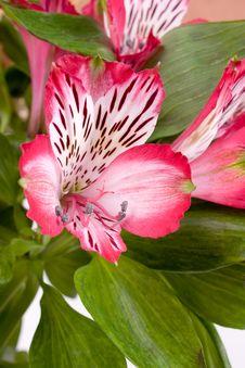 Free Flower Stock Photo - 8193710