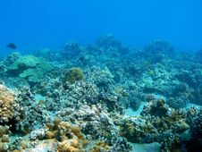 Free Coral Formations Stock Photo - 8194240