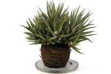 Free Decorative Plant Royalty Free Stock Photo - 8194445
