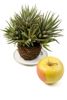 Free Decorative Plant And Apple Royalty Free Stock Photo - 8194525