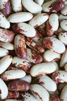 Free Close Up Of Pea Beans Royalty Free Stock Photography - 8194697