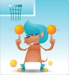 Free Funny Dog Playing Balls Stock Image - 8194811