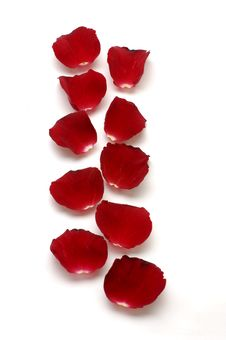 Free Red Petals Royalty Free Stock Photo - 8195005