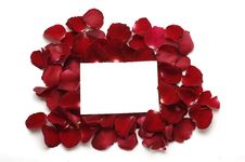 Free Red Petals Royalty Free Stock Images - 8195069