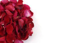 Free Rose Petals Royalty Free Stock Photos - 8195178