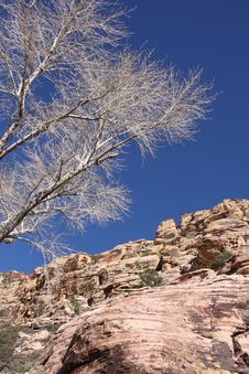 White Tree By Rocky Cliff Stock Images