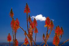 Free Flowers Against A Blue Sky Stock Photo - 8198400